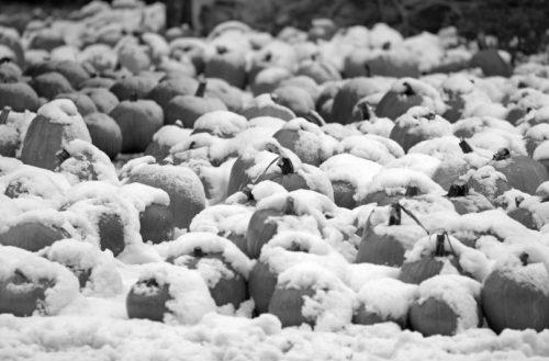 Zimska #buča: O 'ugodnih' razmerah na trgu dela